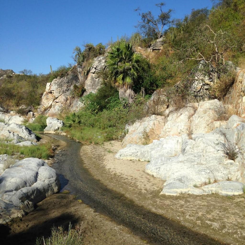 Sierra la Laguna está tipificada como bosque seco. La región estuvo aislada del resto de la península durante millones de años, lo que resultó en la evolución de muchas especies únicas. Fotografía de Michael Bogan