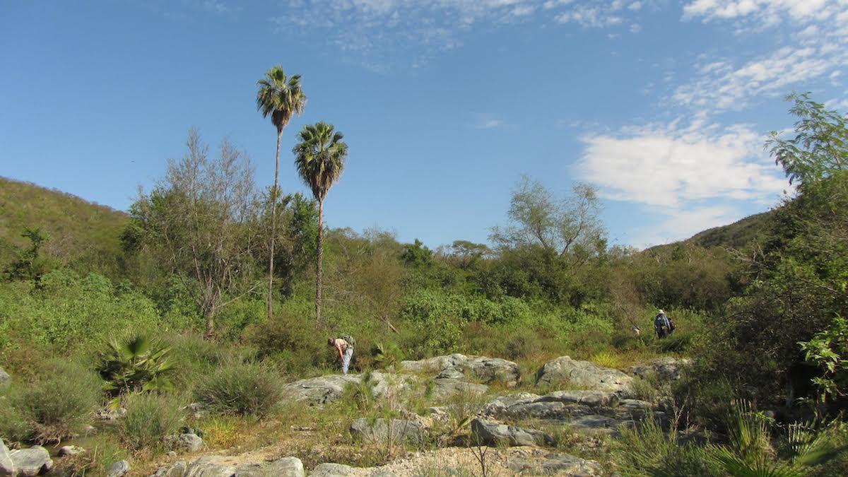 El equipo de herpetología de Nueva Generación sobre el terreno en Sierra la Laguna. Fotografía de Jorge Valdez.
