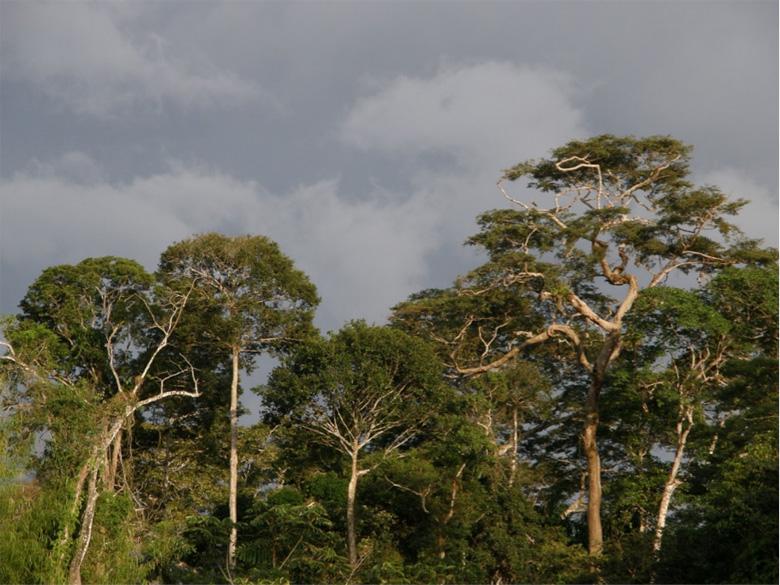 Paisaje típico de los trópicos que alberga gran biodiversidad y ofrece árboles para que diferentes loros y otras aves aniden. Foto de George Olah.