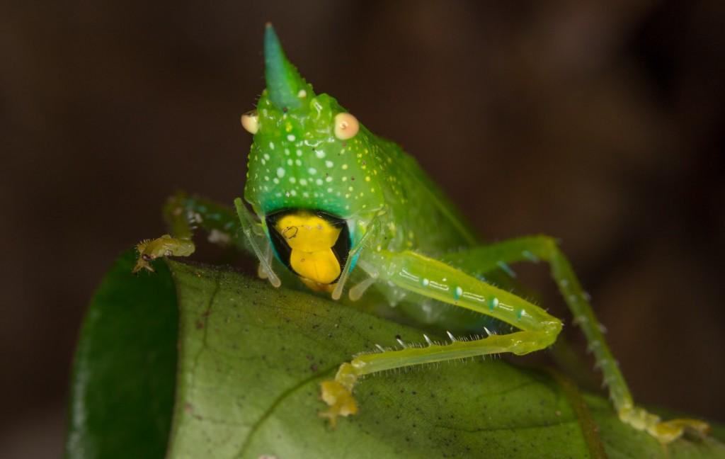 La biodiversidad de la reserva biológica Colonso Chalupas atrae a investigadores de todo el mundo. Foto: Graham Wise.