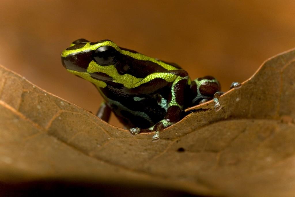 biodiversidad-areas_naturales_protegidas-amazonia-bosques-ecuador-4