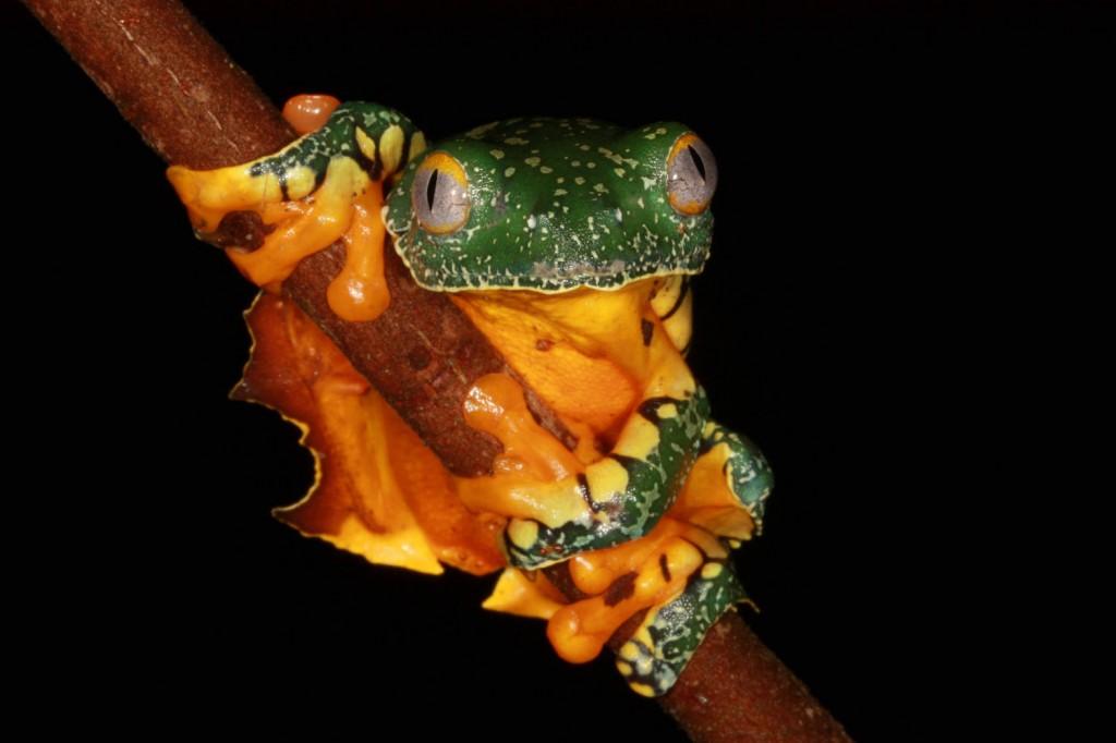 La biodiversidad de la reserva biológica Colonso Chalupas atrae a investigadores de todo el mundo. Foto: Martín Bustamante.