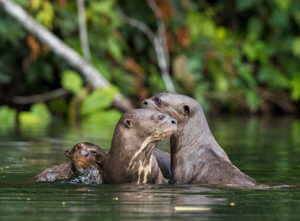 biodiversidad-areas_naturales_protegidas-extincion-conservacion-amazonia-4