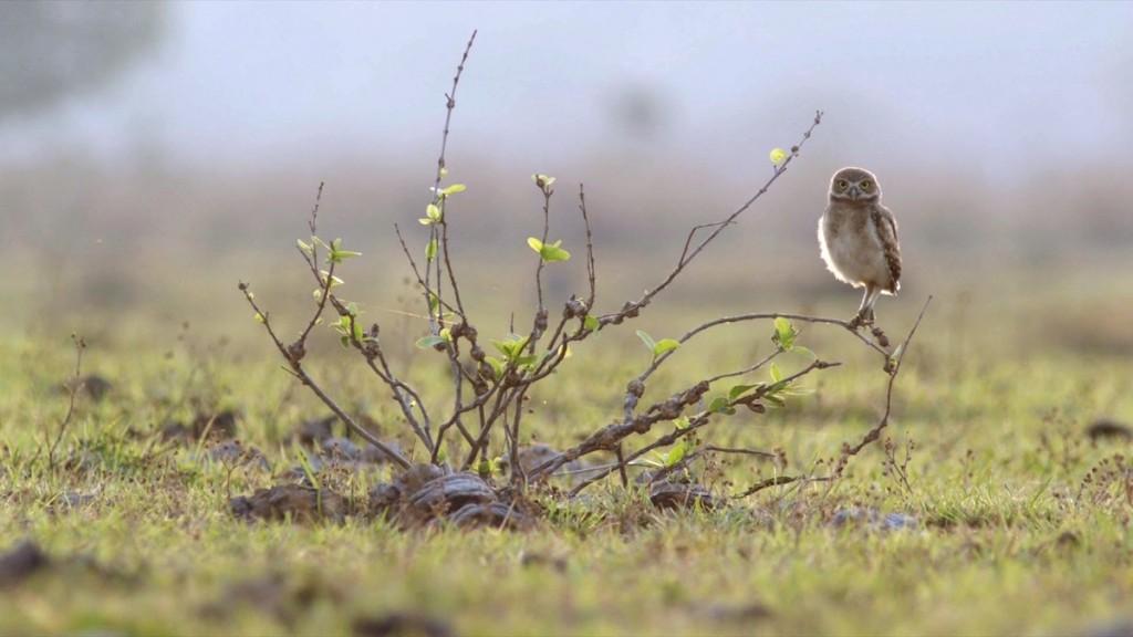 biodiversidad-bosques-conservacion-aves-ecoturismo-3