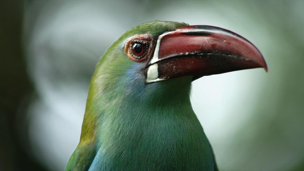 biodiversidad-bosques-conservacion-aves-ecoturismo-5 copia