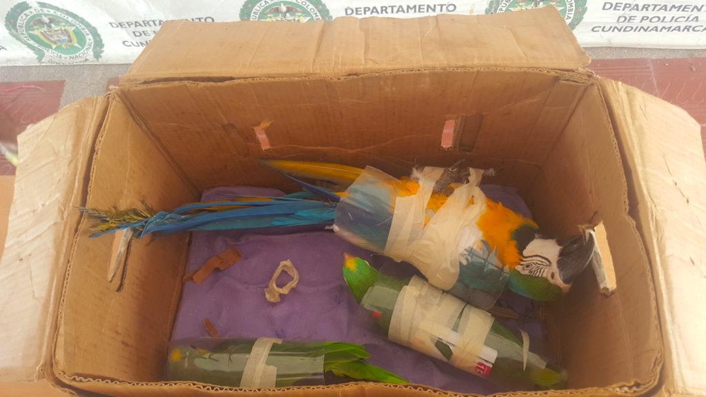 biodiversidad-extincion-trafico_de_especies-amazonia-colombia-10