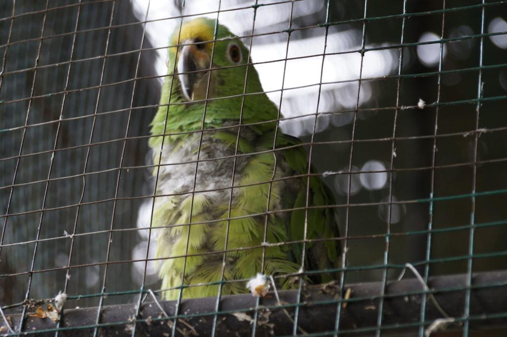 Los investigadores del Instituto Humboldt generaron secuencias del código de barras genético de 152 especies de aves de Colombia, especialmente endémicas. Foto: CAR Cundinamarca.