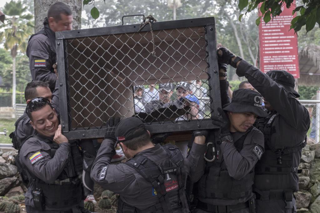 Especial fauna silvestre a la venta m s de 5000 traficantes detenidos este a o en colombia - Lntoreor dijin ...