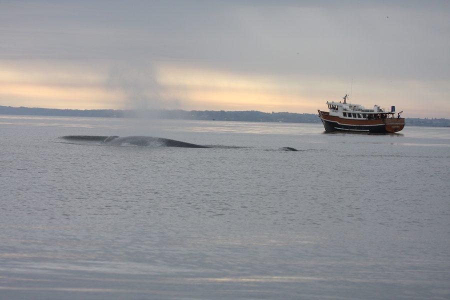 En Chile existen zonas prioritarias para la conservación. Punta de Choros es una de ellas, donde habitan ballenas, delfines, pingüinos, además de ser un área de desove y reproducción de un gran número de especies. Foto: WWF Chile.