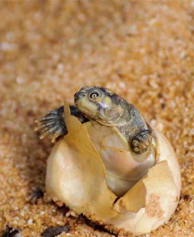 8-turtles