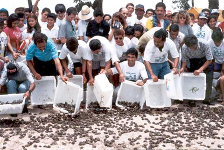 Cientos de crías se dirigen al agua. Solo unas pocas de las 70 millones que el Programa de Conservación de Tortugas del Río Amazonas ha liberado hasta el momento. Foto: Cortesía de IBAMA.