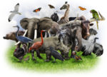 Animals Collage