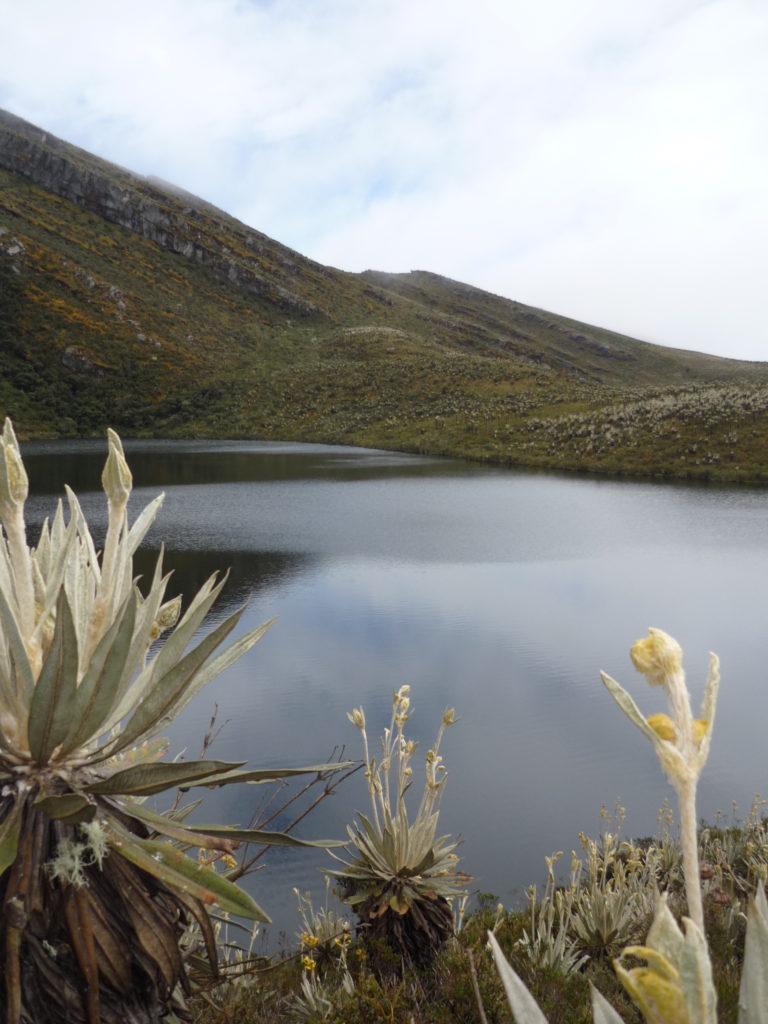 El Parque Nacional Natural Chingaza se encuentra en Cundinamarca. Tiene cerca de 2,000 especies de fauna y flora. Foto: Juliana Hoyos.