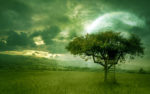 golden_dream_wallpaper_moroka323