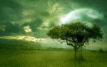 golden_dream_wallpaper_moroka323