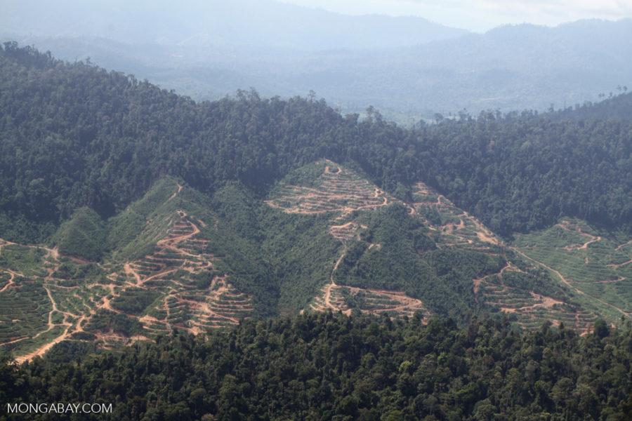 La deforestación causada por la palma de aceite en Sabah, un estado de Malasia en la isla de Borneo. Foto: Rhett A. Butler.