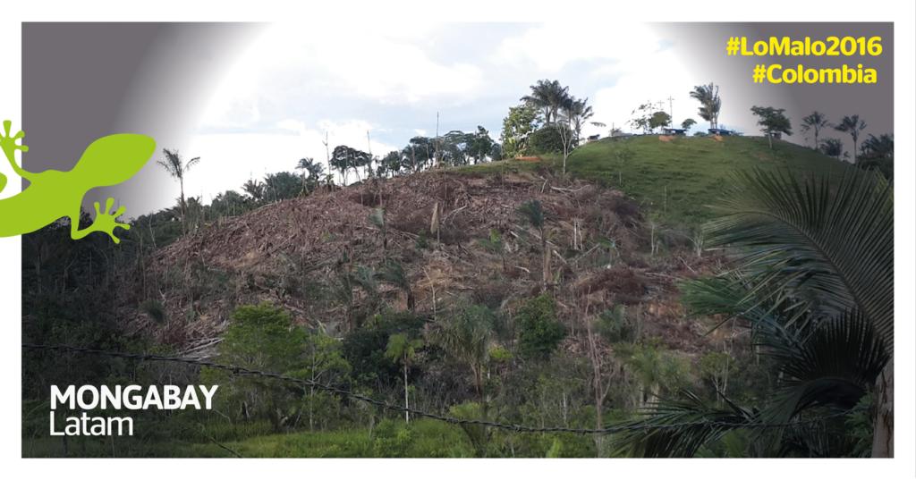Foto: Cortesía de la Subdirección de Administración Ambiental, Corpoamazonia.