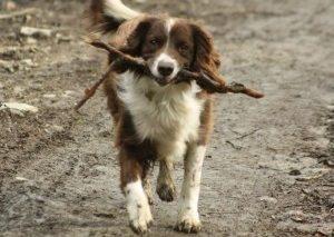 perros-campo-rurales-desparasitar-enfermedades-salud-cuidados-art