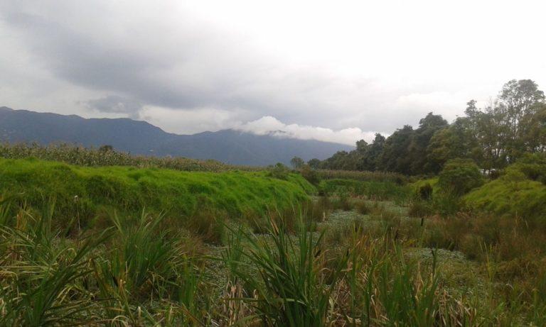 Matorrales y bosques en la reserva ubicada al norte de la capital colombiana. Foto de Fernanda Sánchez.