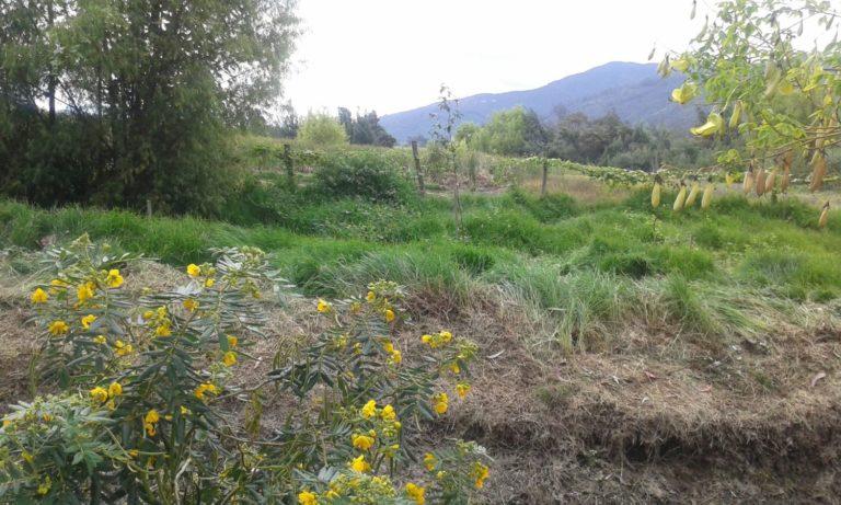 Flores amarillas observadas durante el recorrido en el área de la reserva. Foto de Fernanda Sánchez.