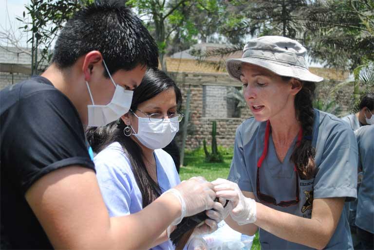Daut imparte un curso de vendaje en Perú, donde trabajó en su tesis doctoral. Su modelo de comercio de vida silvestre se basa en la experiencia que adquirió como voluntaria del Cuerpo de la Paz en Ecuador, donde creó una organización de bienestar animal, la Fundación de Protección Animal, para mejorar el cumplimiento de la ley a nivel local y reducir la demanda doméstica de mascotas salvajes y productos de la naturaleza. Foto cortesía de Elizabeth Daut.