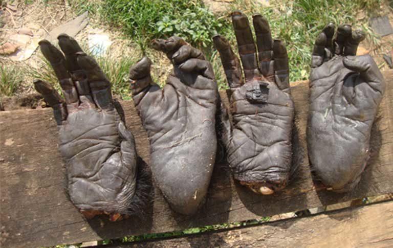 Extremidades de primates confiscadas en Yaundé, capital de Camerún. Foto cortesía de LAGA.