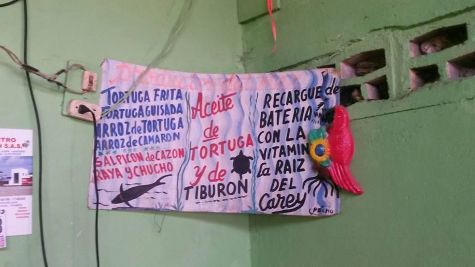 Más de 150 especies se usan para la alimentación en Colombia: Foto: Cifor.