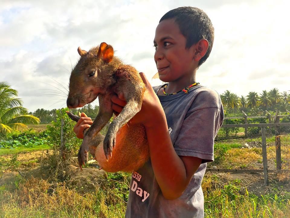 Las prácticas culturales de las comunidades aseguran la conservación de la fauna silvestre. Foto: Cifor.