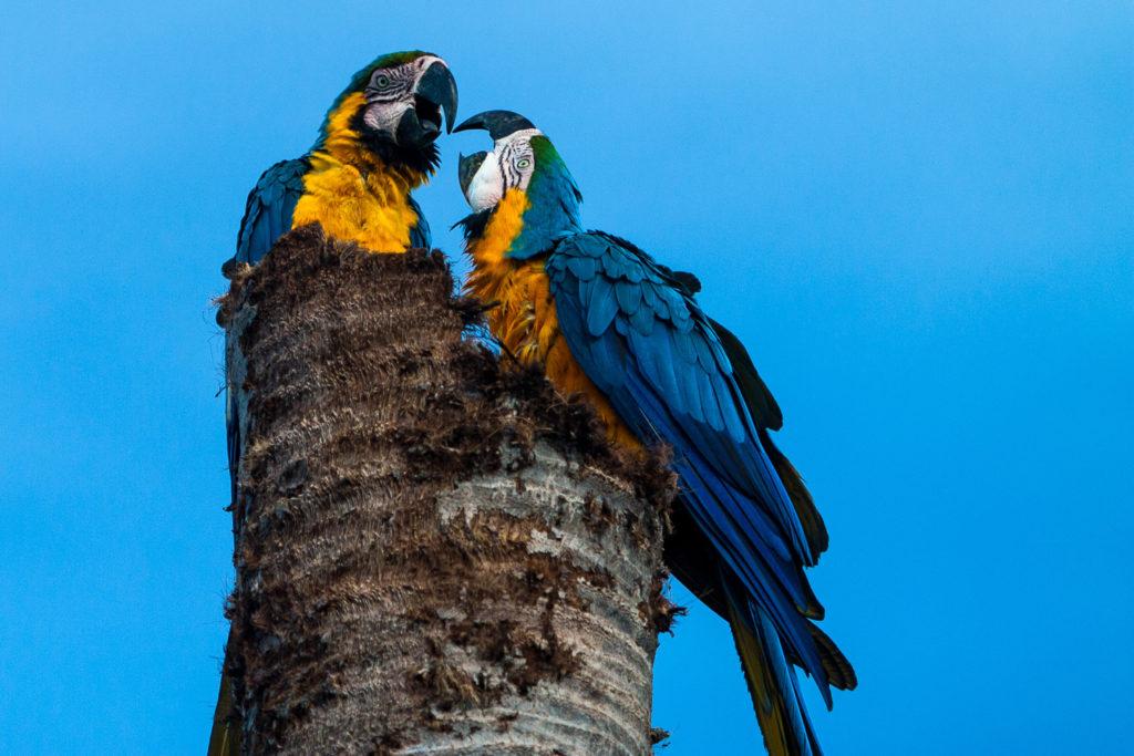 Colombia tiene 56 343 especies de fauna y flora, de las cuales 798 están amenazadas. Foto: ©Diego J. Lizcano.