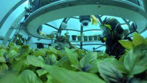 agricultura-submarina