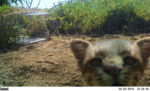 biodiversidad-conservacion-gatos-bosques-investigacion_cientifica-13