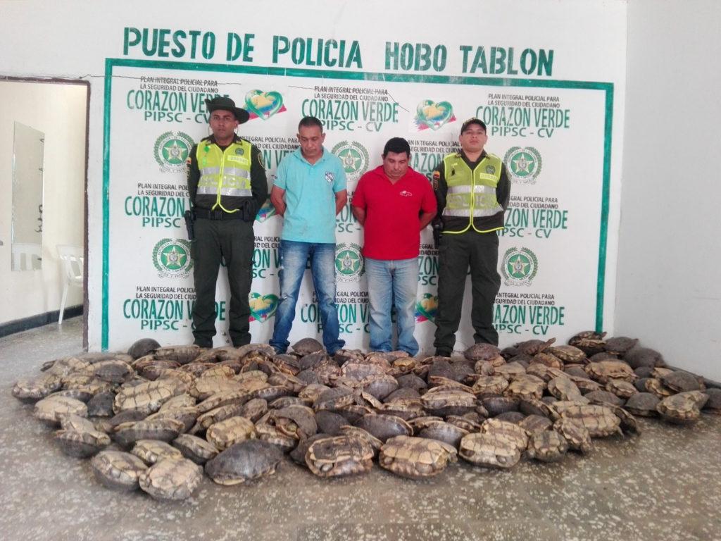 Decomiso de 192 tortugas Hicoteas en Córdoba. Foto: Cortesía de la Policía Ambiental de Córdoba.