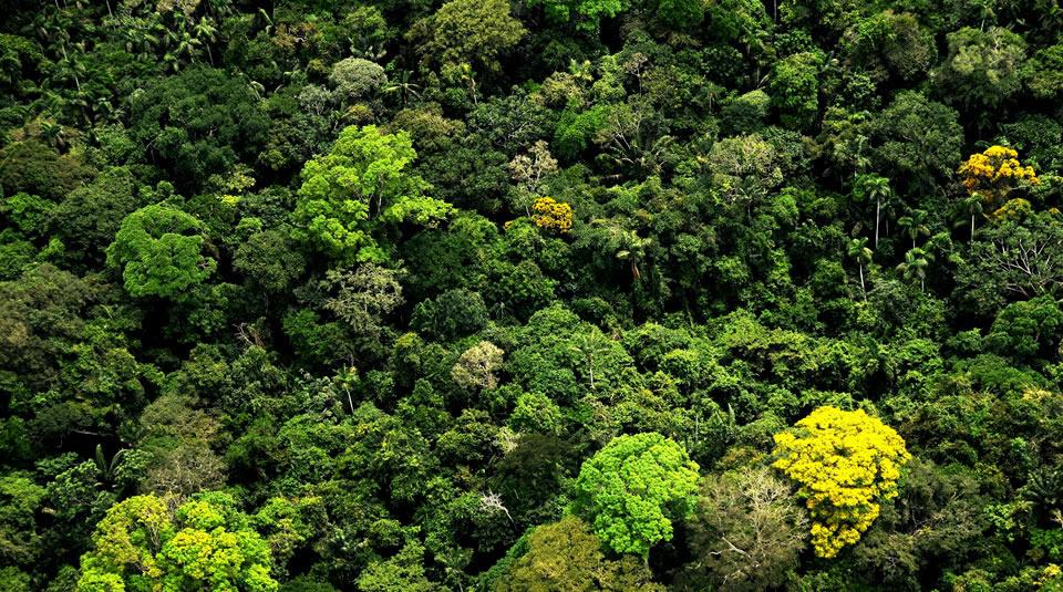 Bosques colombianos. Foto: Álvaro Gaviria/ Parques Nacionales Naturales.