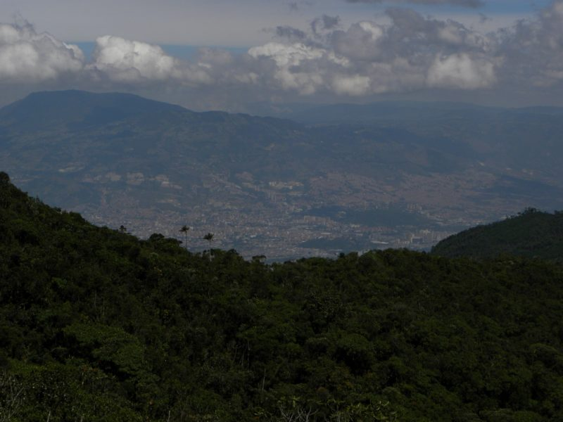 Bosques circundantes que sirven de hábitat al puma en cercanías a Medellín. Foto de Aburrá Natural.