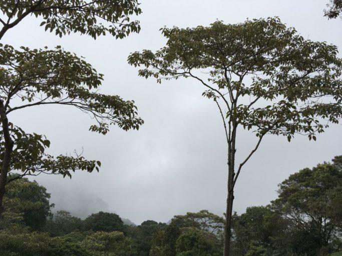 bosques de niebla En el presente trabajo se estudió la diversidad y composición de la comunidad  de mariposas del bosque de niebla de la reserva el romeral ubicada al.