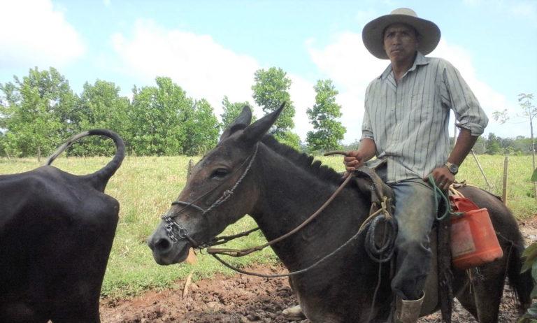 La compra y venta de tierras para ganadería es una práctica común en la zona de amortiguamiento de la Reserva de Biosfera del Sureste de Nicaragua. Foto: Wilder Pérez R.