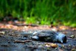 bird-1683655_960_720