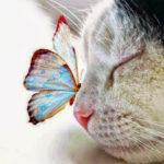 10-hermosas-imagenes-de-gatos-con-mariposas