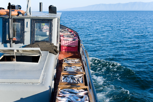 a boat carries boxes with fresh fish, just caught