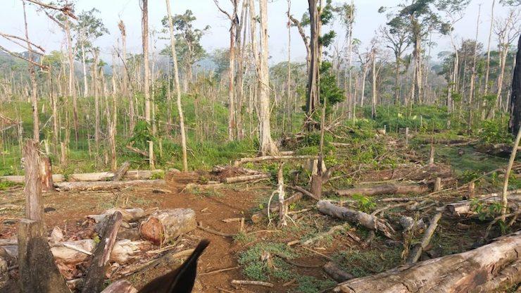 ganaderia-deforestacion-areas_naturales_protegidas-pueblos_indigenas-nicaragua-1-1067x600