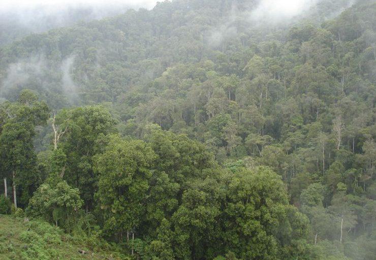 roble negro bosque colombia
