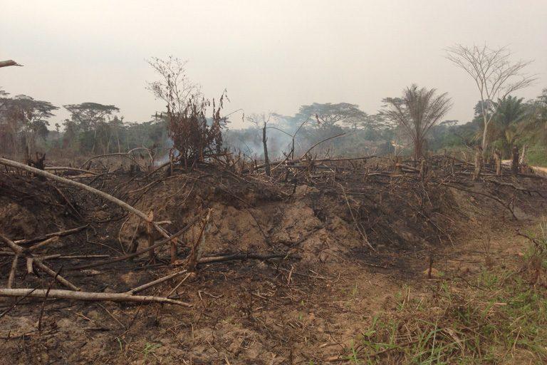 Desmonte de tierras para agricultura mediante roza y quema en la República Democrática del Congo. Foto: John C. Cannon