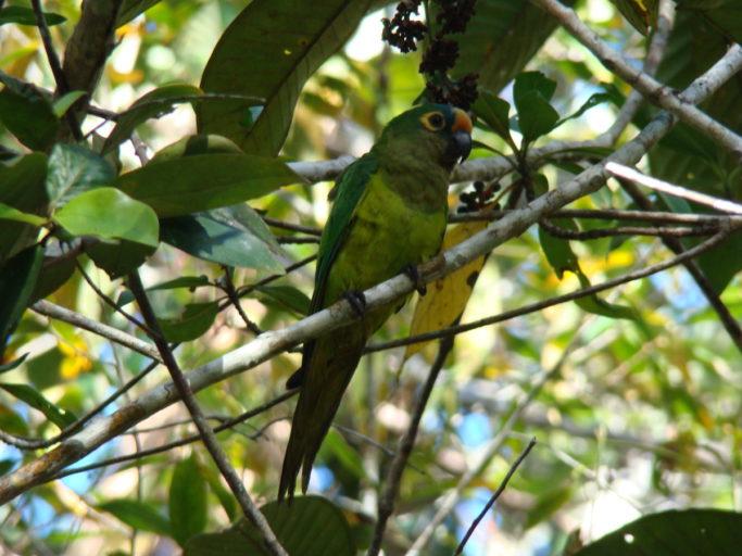 Un muestra de la gran diversidad de aves presentes en el área. Foto: ACEAA.