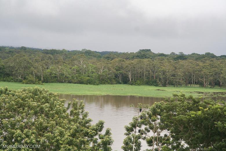 Un paisaje de la Amazonía colombiana. Foto: Rhett A. Butler