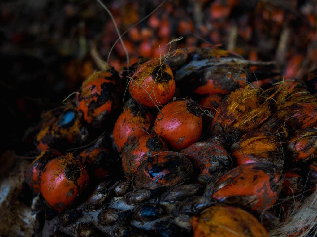 El aceite de palma se produce a partir del fruto de la palma de aceite. Foto de Bram Ebus para Mongabay