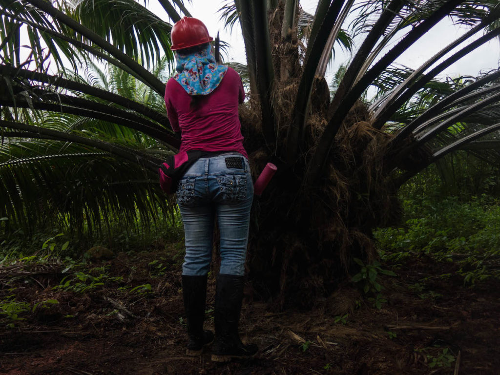 Un trabajador de plantación aplica herbicida a una palmera de aceite. Foto de Bram Ebus para Mongabay