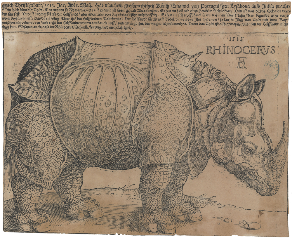 Rinoceronte (Grabado) - Alberto Durero [1515]
