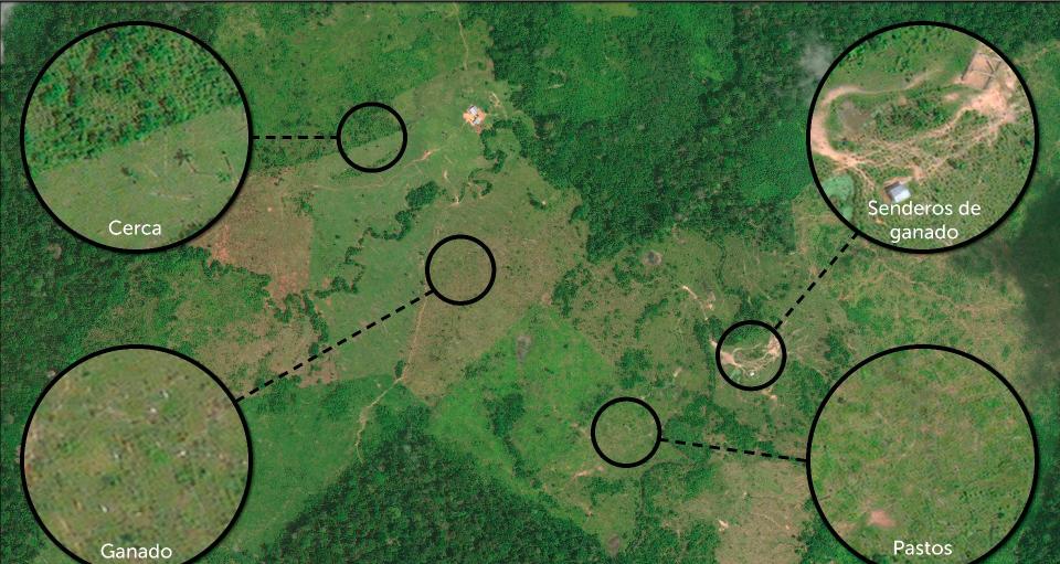 Una de las causas principales de la deforestación en Colombia es la ganadería. Foto: MAAP