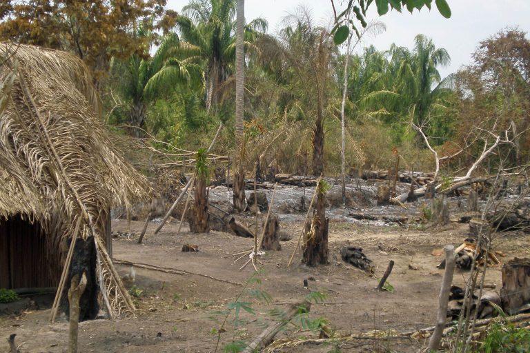 La tortuga carranchina habita el bosque seco tropical del Caribe colombiano, una de las áreas más degradadas del país. Foto: Germán Forero / WCS Colombia