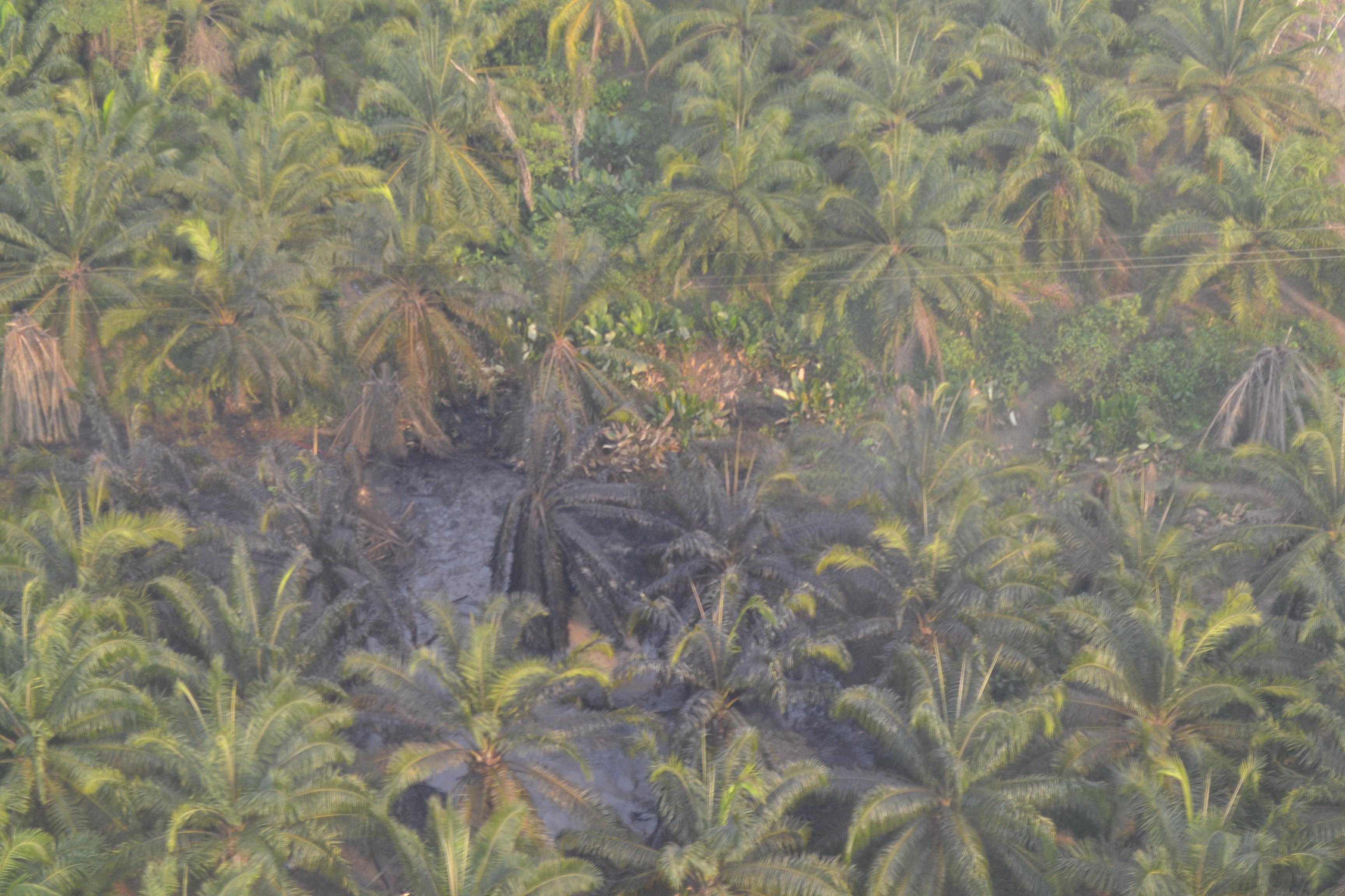 Así se ve desde el aire el lugar del afloramiento de petróleo. /María Paula Rubiano - El Espectador